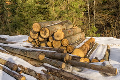 Stacks of cut trees in forest Royalty Free Stock Images