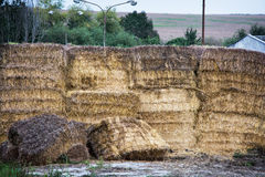 Stacks of dry hay Royalty Free Stock Photography