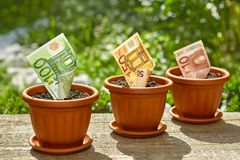 Stacks of euro bills growing in flowerpots. On wooden surface Stock Photography