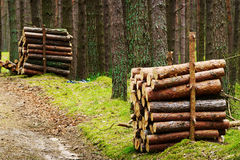 Stacks of felled pine tree trunks in evergreen coniferous forest. Royalty Free Stock Image