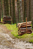 Stacks of felled pine tree trunk logs in evergreen coniferous forest. Stock Photos