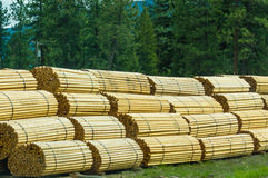 Stacks of fence posts at a lumber mill Stock Images