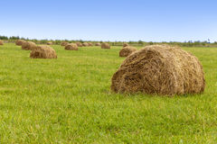 Stacks in the field in a sunny day Stock Photos