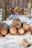 Stacks of firewoods in spring forest Stock Photo