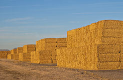 Stacks of Hay. Stacks of deep golden hay piled up at the side of the road in southern Arizona near Gila Bend royalty free stock photography