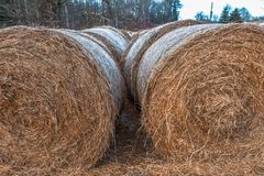 Hay Bales stacked up on a field in rural area. Stacks of hay bales lined up on a field in a rural area, ready to be processed Stock Photography