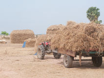 Stacks of hay in Cambodia Royalty Free Stock Images
