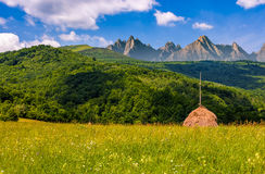 Stacks of hay on the field in mountains. Stacks of hay on hayfield near the forest. Beautiful countryside landscape in High Tatra Mountains Stock Images