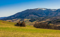 Stacks of hay on the hill side. Agricultural field on a hillside with haystacks on a green grassy meadow. beautiful springtime morning in mountains Stock Photography
