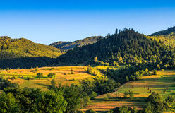 Stacks of hay on the hill side. Agricultural field on a hillside with haystacks on a green grassy meadow. beautiful summer morning in mountains. Carpathian rural Stock Photography