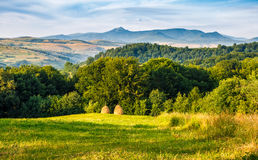 Stacks of hay on the hill side. Agricultural field on a hillside with haystacks on a green grassy meadow. beautiful summer morning in mountains. Carpathian rural Stock Photos