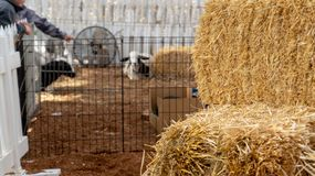Stacks of hay at an indoor petting farm. stock images