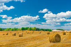 Stacks of hay on the treated the field Royalty Free Stock Photo