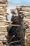 Stacks of logs Stock Images
