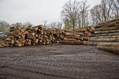 Stacks of Logs Awaiting Conversion To Lumber Stock Photos