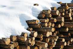 Stacks of logs cut by loggers Royalty Free Stock Photos