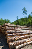 Stacks of logs at a forest logging site Stock Photos