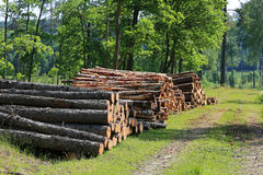 Stacks of Logs by Road at Summer Stock Image