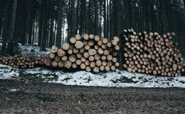 Stacks of Logs in a Snow-Covered Forest Royalty Free Stock Images