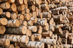 Free Stacks Of Birch Logs Close Up Stock Image - 190300461