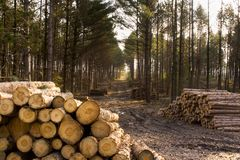 Free Stacks Of Pulp Logs Royalty Free Stock Photo - 8736615