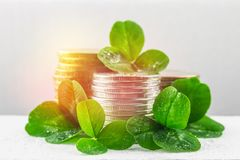 Stacks Of Russian Coins With Clover Leaves On A Gray Background With Droplets Of Water. St.Patrick S Day. Stock Images
