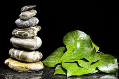 Stacks of pebbles and ivy leaves Stock Photography