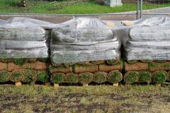 Stacks of sod rolls in cellophane and on wooden pallet Royalty Free Stock Photo