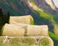 Stacks of sod rolls for new lawn. Natural grass turf for installing making new field royalty free stock photos