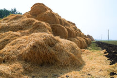 Stacks of straw on the field Stock Image