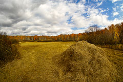 Stacks of straw after harvest in autumn stock image