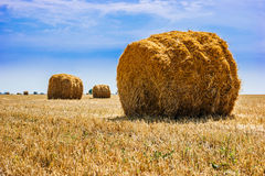 Stacks of straw on sloping wheat field Stock Photography
