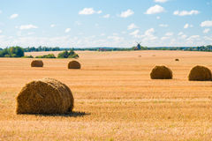 Stacks of straw in a yellow   field Stock Photography