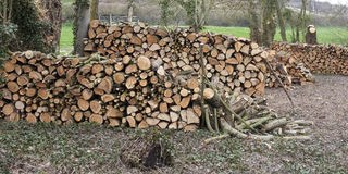 Stacks of timber fuel logs Stock Photos