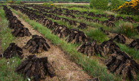 Stacks of turf drying in Irish peat bog Stock Image