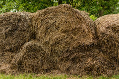 Stacks of wheat twisted into a roll Royalty Free Stock Images