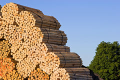 Stacks of wood at a saw mill. A picture of bundles of wood, stacked up high in a saw mill stock photos