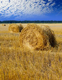 Stacks of yellow straw against against the cloudy sky Stock Photo
