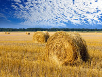 Stacks of yellow straw in the sunny summer day against against the cloudy sky Royalty Free Stock Photography
