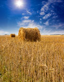 Stacks of yellow straw in the sunny summer day against the blue sky Stock Images