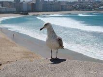 Stad av La Coruña spain Marin- landskap av den spanska kusten royaltyfria bilder