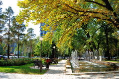 Stad en bomen Royalty-vrije Stock Foto's