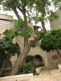 stad gammala jerusalem judisk fjärdedel Royaltyfri Fotografi