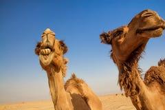 stad kuwait Arkivfoton