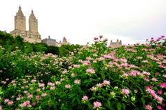 Stad med trädgårdar Arkivbild