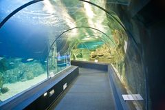 Stad Oceanarium Stad van Sotchi, Adler Microdistrict Binnenlands stock foto's
