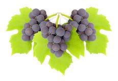 stad z winogron Zdjęcie Stock