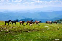 stada koni krajobraz Obrazy Stock