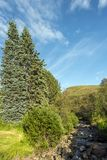 Stadara water stream in Hallormsstadaskogur National forest in Eastern Iceland.  royalty free stock photography