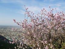 Staden av Osh Sikt från monteringen Sulaiman-Too Fotografering för Bildbyråer